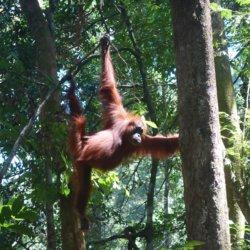 Indonesien 🇲🇨 Dschungel Tour in Bukit Lawang
