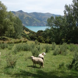 Neuseeland 🇳🇿 First Part